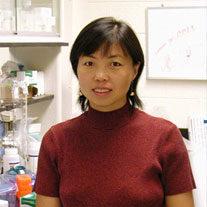 Xinyu Zhao