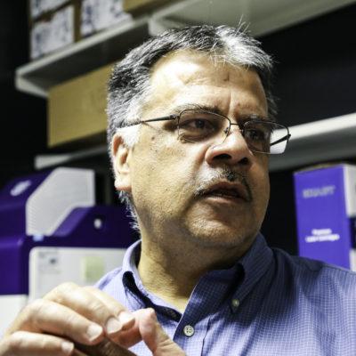 Nader Sheibani